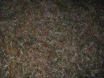 Hühnerauge, Hornhaut und Warzen - Das Gratis Mittel, trockene Weidenblaetter