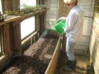 Samen erfolgreich keimen lassen - Die beste Methode Samen, Giessen im Glashaus