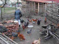 jeden Tag 1 Huehnerei im Seniorenzimmer auf Bauernhof