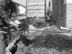 Biomasse Heizung Eigenheim - DIY Bauanleitung und Sparen (Teil 3/4) fruchtbarer Humus aus BM