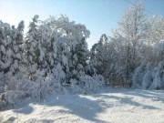 Wintereindrücke Permakultur Garten im Schnee, bizarre Formen im Schnee