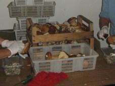 Pilze mit Messer ausschneiden, teilen oder in Stuecke schneiden