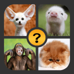 Download 4 Pictures 1 Word  APK, APK MOD, 4 Pictures 1 Word Cheat