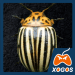 Free Download Crash of Colorado Potato Beetle APK, APK MOD, Cheat