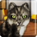 Free Download Talking Cat Funny  APK, APK MOD, Talking Cat Funny Cheat