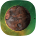 Free Download Exoplanets Online 0.3.9 APK, APK MOD, Exoplanets Online Cheat