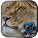 Download Hidden Animals game : Photo Hunt . Search Objects APK, APK MOD, Cheat