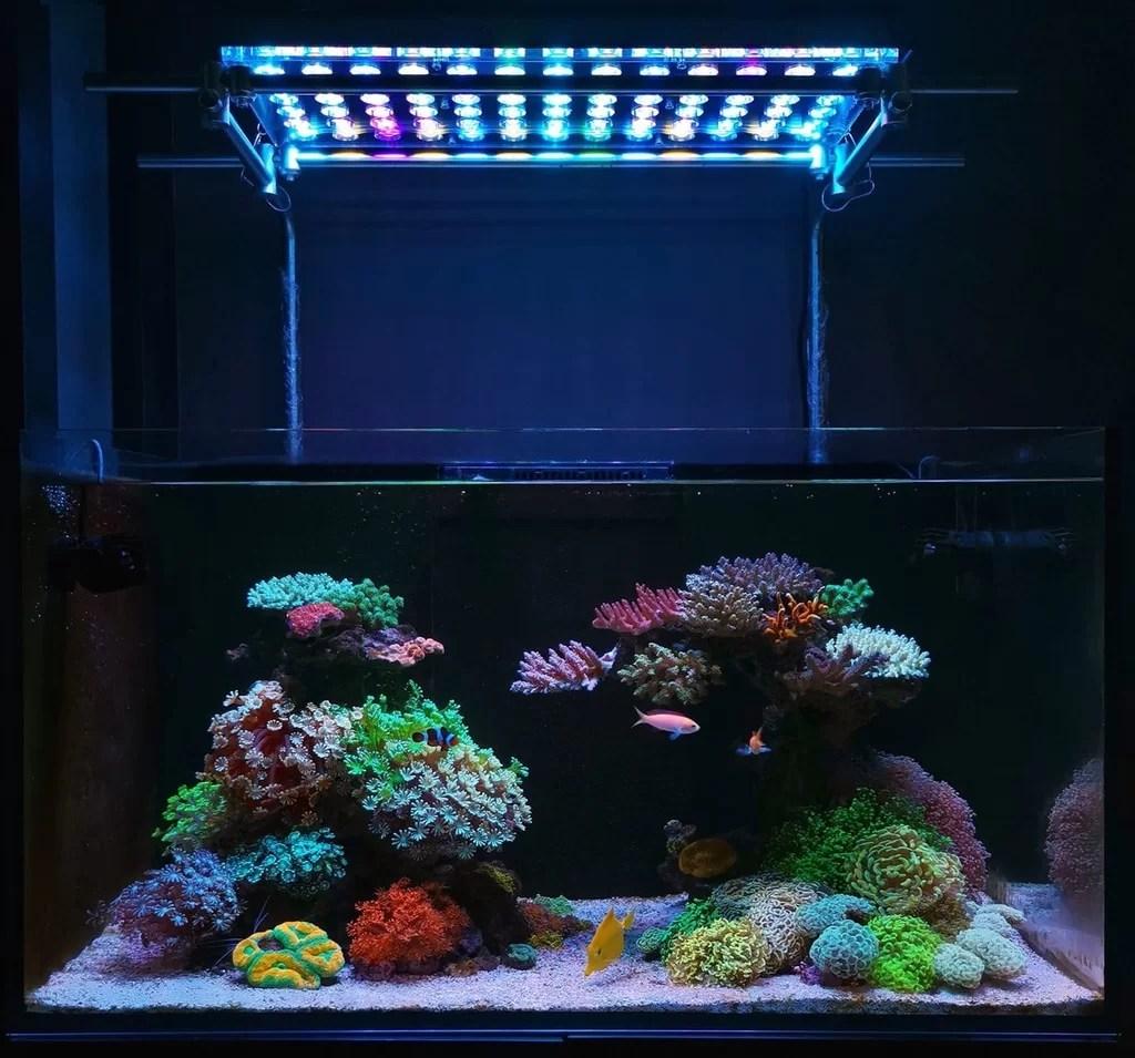 Best Reef Led Lichter 2019 Best Orphek 2019 Welches Ist Orpheks Bestes Led Aquariumlicht