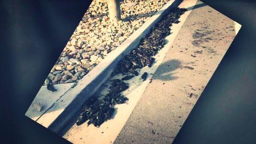 Tote                                                           Vögel
