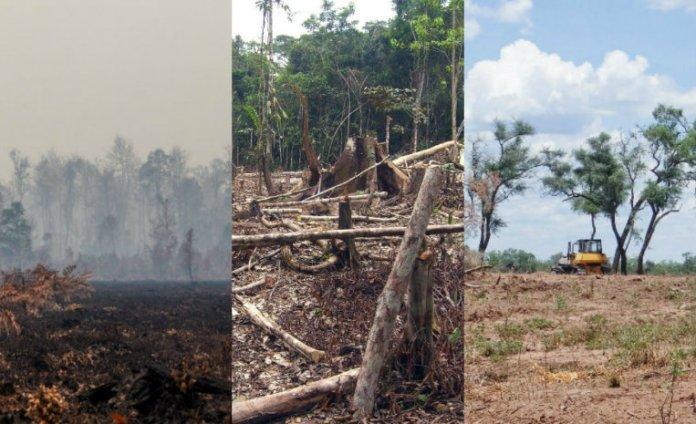 10 bosques que están a punto de desaparecer   De10