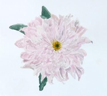 Pastel Chrysanthemum