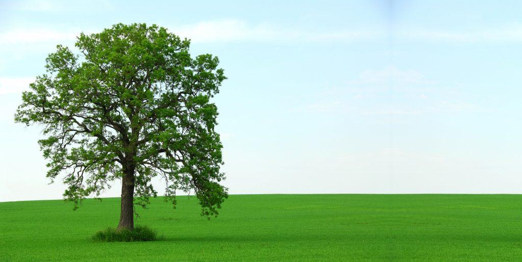 tree in grassy field