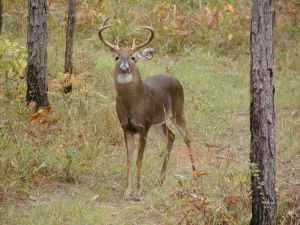 Dead Deer Removal Duluth GA