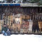 Wall of Fur, 2010