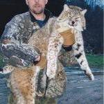 The majestic bobcat