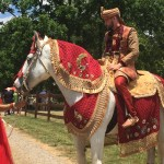 White Horse For Hindu Indian Wedding Baraat
