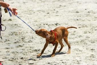 dogleash2
