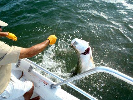 deadfish-alexander-065