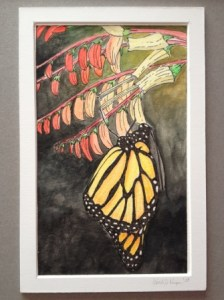 Knape, Wendi. Monarch Butterfly, 2008. Ink and watercolor on paper.