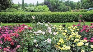 CBG Rose Garden 1