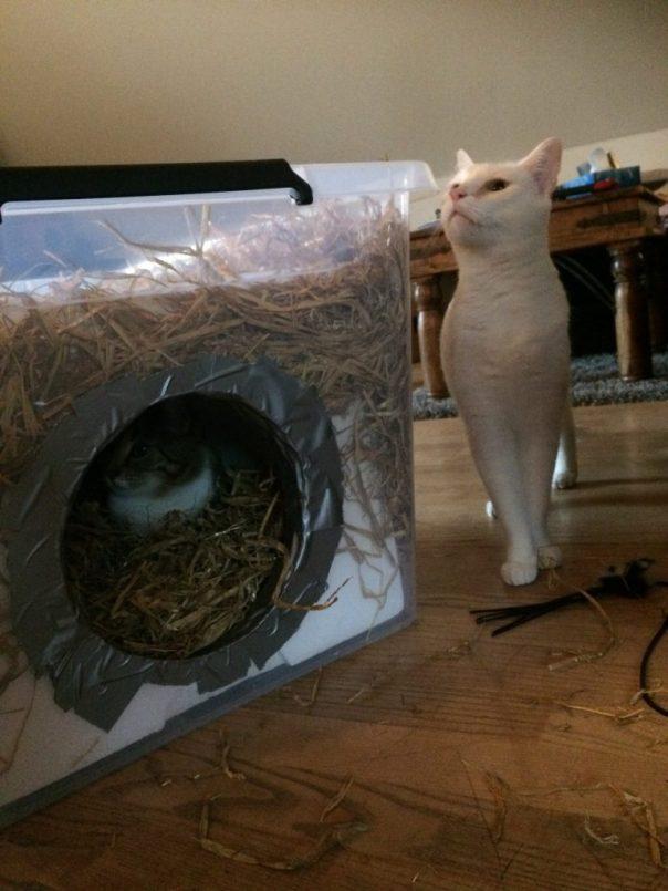 cat shelter, katte shelter, vildkat, udekat