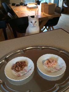 katte opdragelse