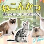 癒しのねこカフェで恋する♪ねこんかつ 11/13(日)