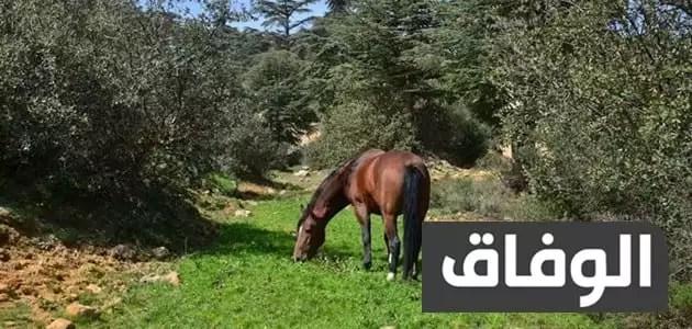 أنواع المحميات في الجزائر
