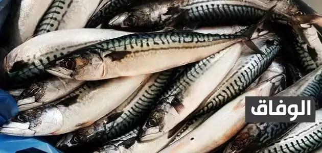 نسبه البروتين في سمك الماكريل