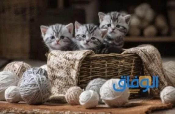 دلالة رؤية القطط في المنام للفتاة العزباء