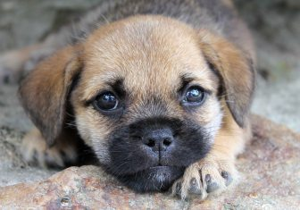puppydogeyes