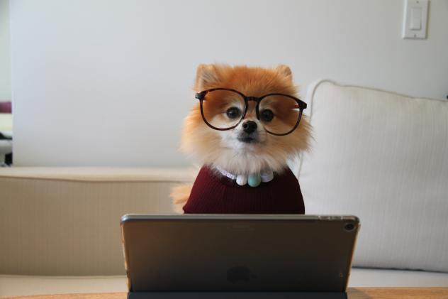 A dog with glasses on sits by a laptop