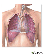 Illustration of the thorax
