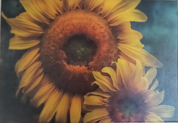 Sunflower Print from Framed Art