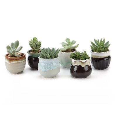 Amazon : 2.5 Inch Ceramic Succulent Pot Just $7.90 W/Code (Reg : $12.99) (As of 10/13/2019 10.37 AM CDT)