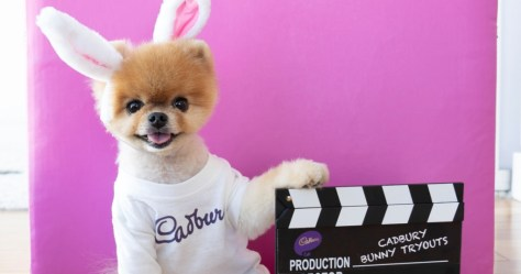 The next Cadbury Bunny could be your Pet and win $5000 Enter Now!