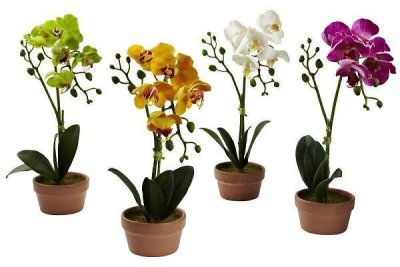 Home Depot: Set Of 4/Ochrid Plants With Clay Vase $36.42 + Store Pickup!