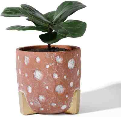 Amazon: Cement Planter Pot - 5.5 Inch Red Concrete Planters, Just $15 after coupon!
