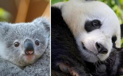 FREE Admission for Kids at San Diego Zoo – Whole Month of October!