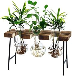 Amazon: LESES Air Plant Terrarium $11.39 (Reg. $23)