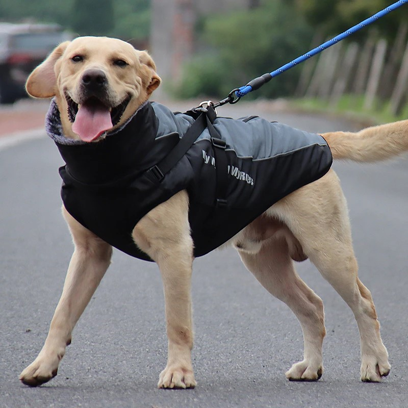Top 5 polyester coats for dogs on AliExpress