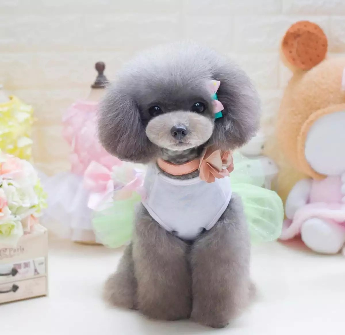 Top 5 cute clothes for female dogs from AliExpress