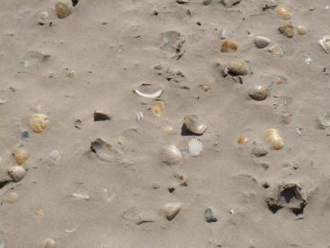 South Padre Island Shells