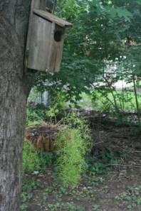 Bird&SquirrelHousewithAsparagusFernPlanter