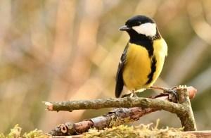 best mini budget binoculars for birding