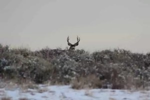 top Swarovski spotting scopes reviews