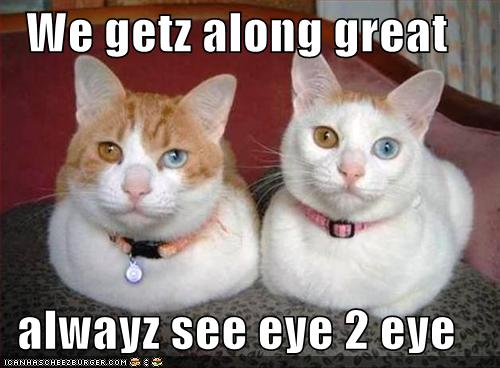 funny-pictures-cats-get-along-great-and-always-see-eye-to-eye
