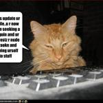 funny-pictures-cat-updates-your-profile