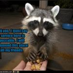 funny-pictures-raccoon-recommends-your-house