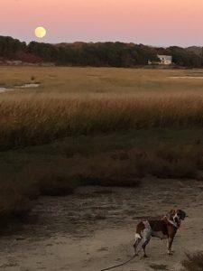 beagle-moon
